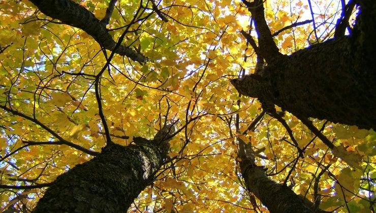 leaves-important-plants