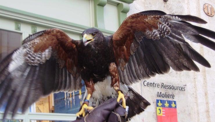 legal-pet-falcon