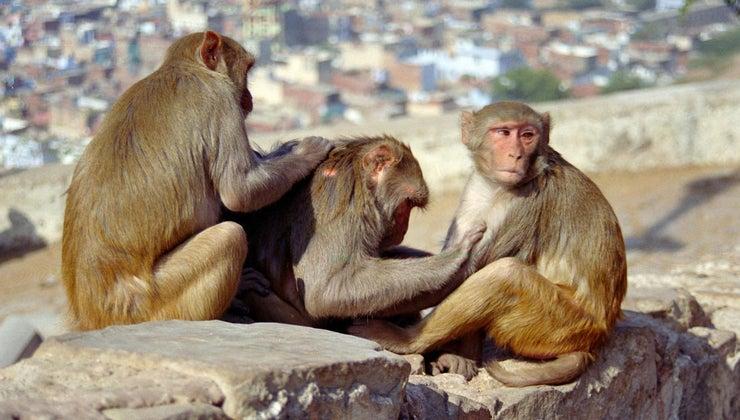 life-cycle-monkey