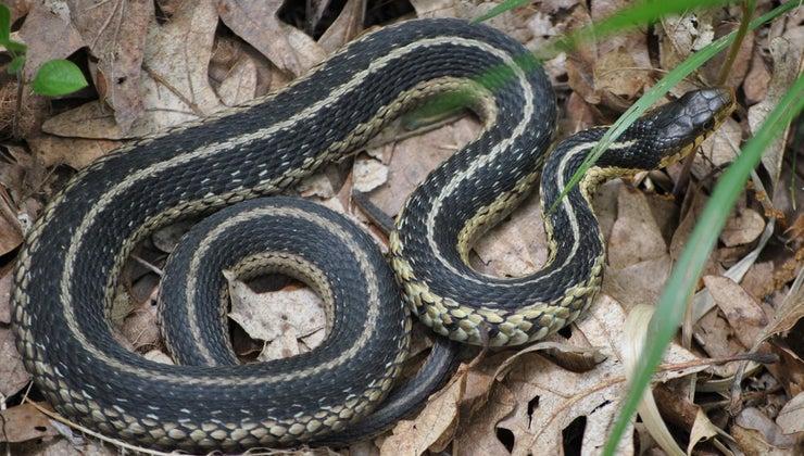 life-cycle-snake