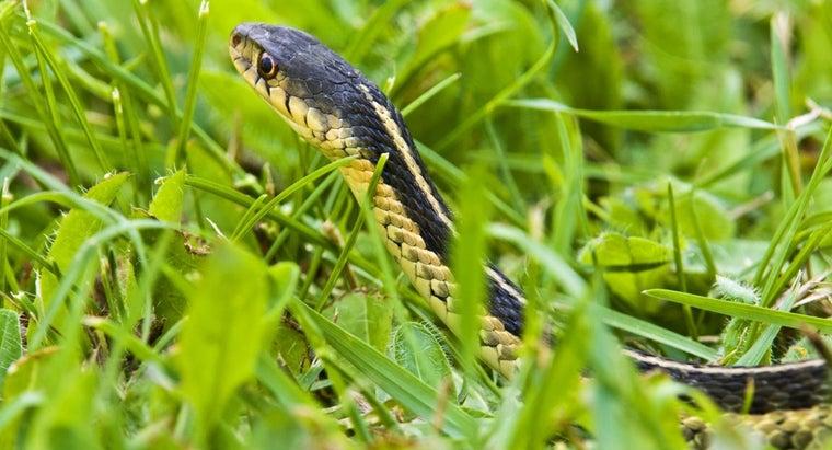 lime-keep-snakes-away