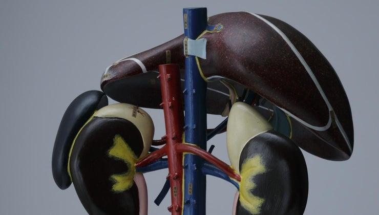 liver-nodules-sign-cancer