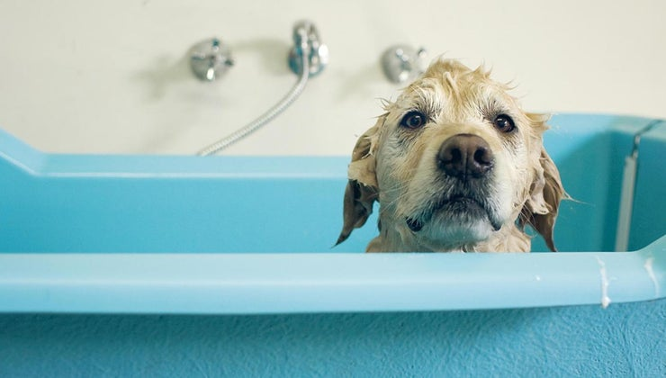 long-after-female-dog-gives-birth-safe-bathe-her