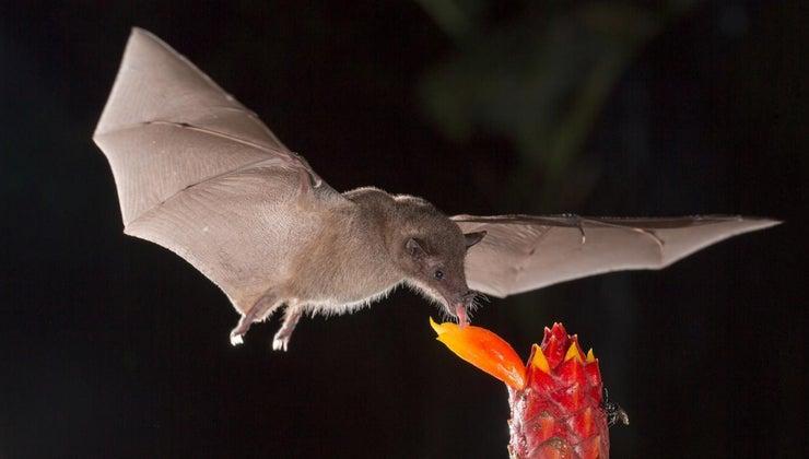long-bats-live