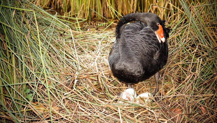 long-duck-eggs-hatch