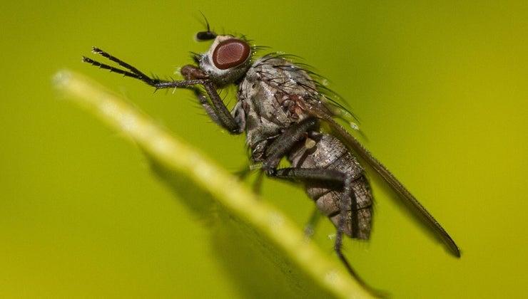 long-house-flies-live