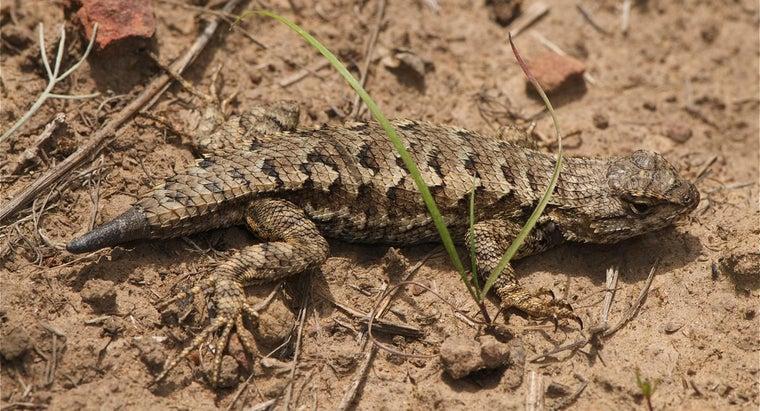 long-lizard-s-tail-grow-back