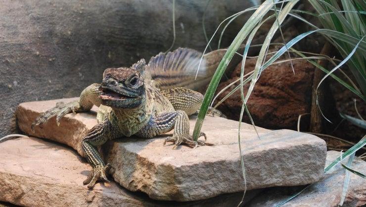 long-lizards-live