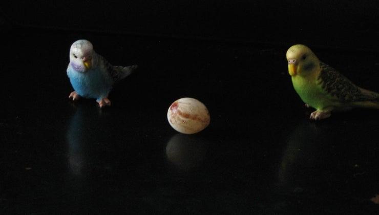 long-parakeet-eggs-hatch