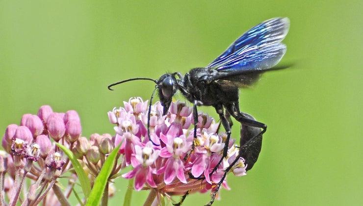 long-wasps-live