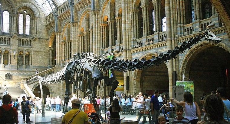 longest-dinosaur