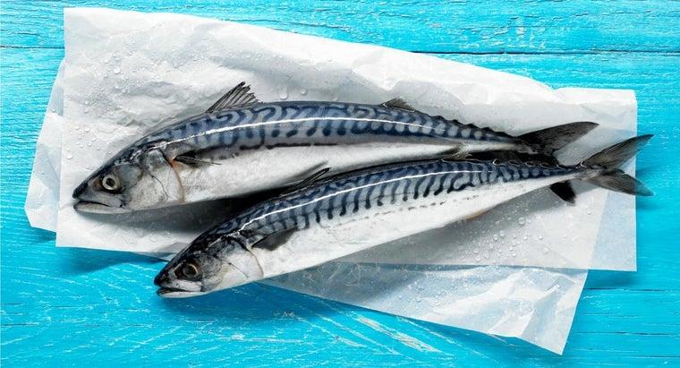 mackerel-season