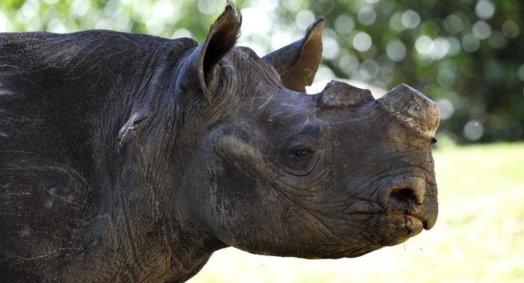 main-causes-poaching