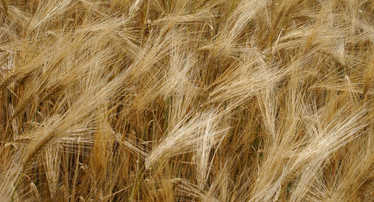 main-crops-grown-russia