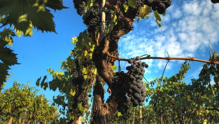 main-crops-italy