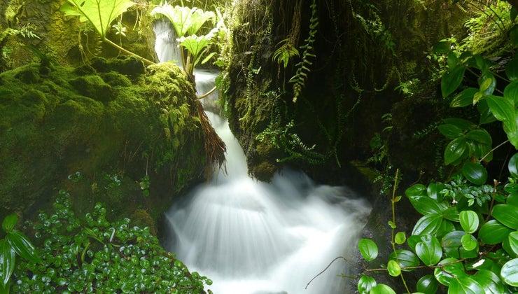 vegetation-malaysia