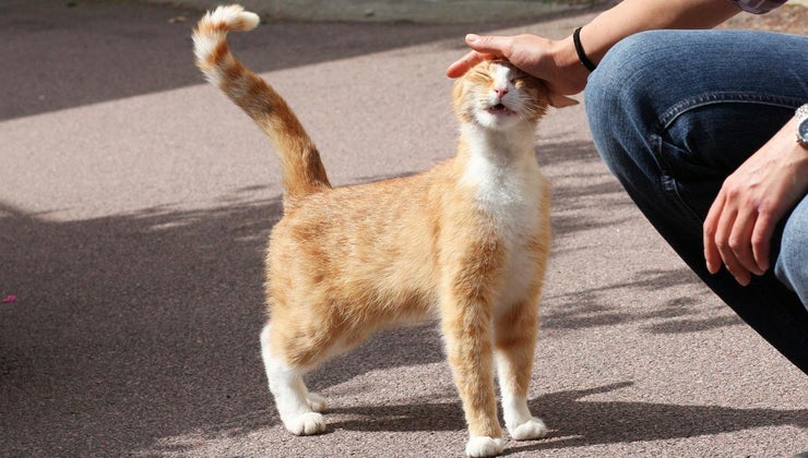 male-cat-called