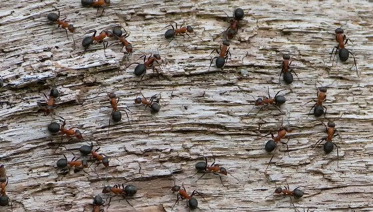 many-ants-world