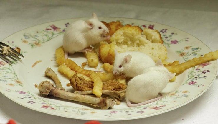 many-babies-mice-once