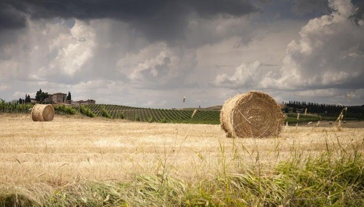 many-bales-hay-ton