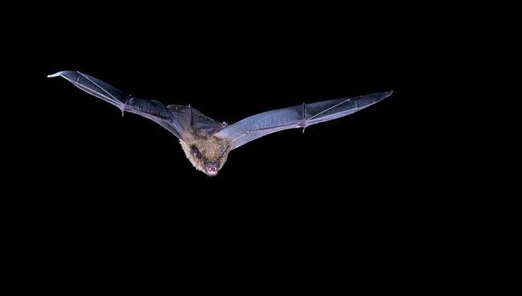 many-bugs-bat-eat-night