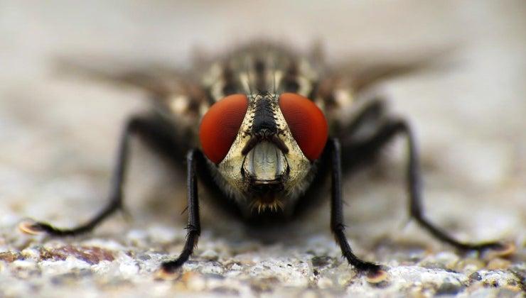many-bugs-eat-sleeping
