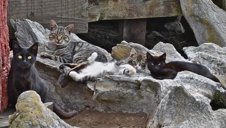 many-cats-world