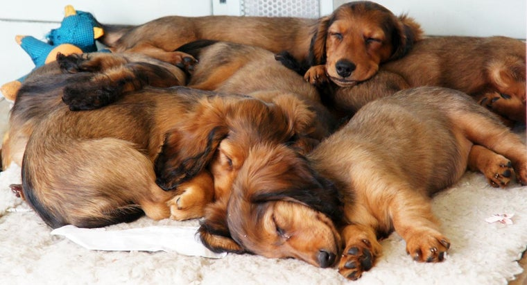 many-dogs-can-one-household-own