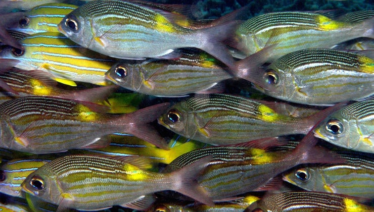 many-fish-world