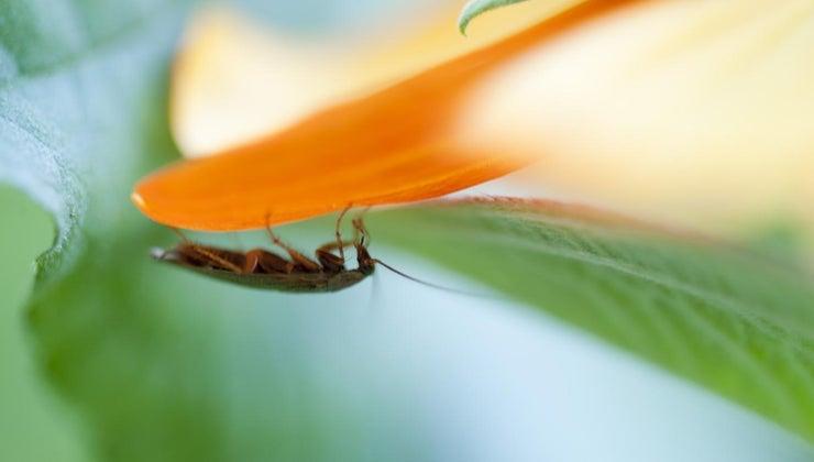 many-legs-cockroach