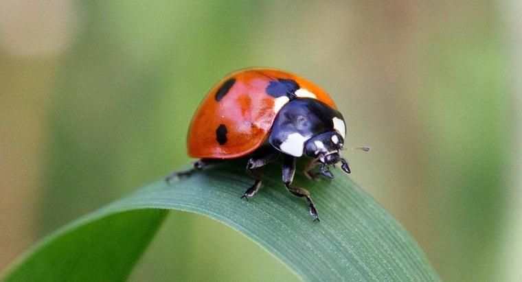 many-legs-lady-bug