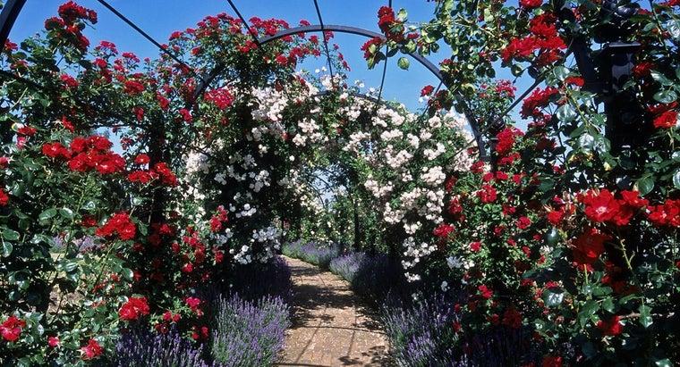 many-types-roses-world