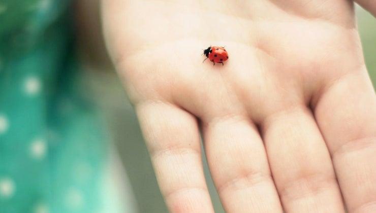 mean-ladybug-lands