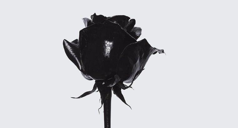 meaning-black-rose