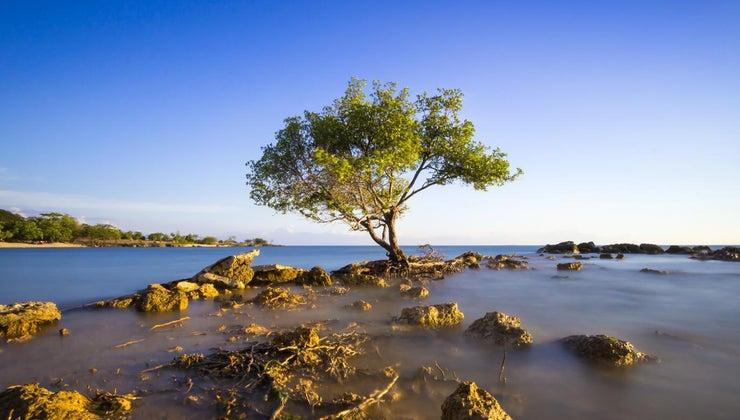 meaning-poem-trees-joyce-kilmer