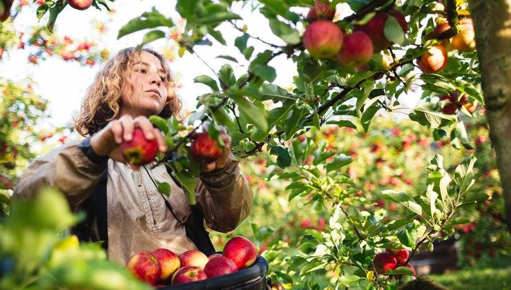month-pick-apples