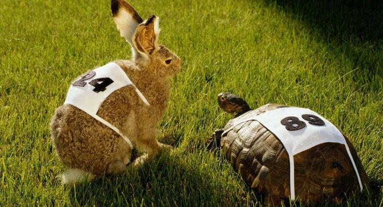moral-lesson-story-rabbit-turtle-race