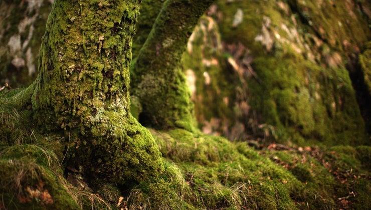 moss-reproduce