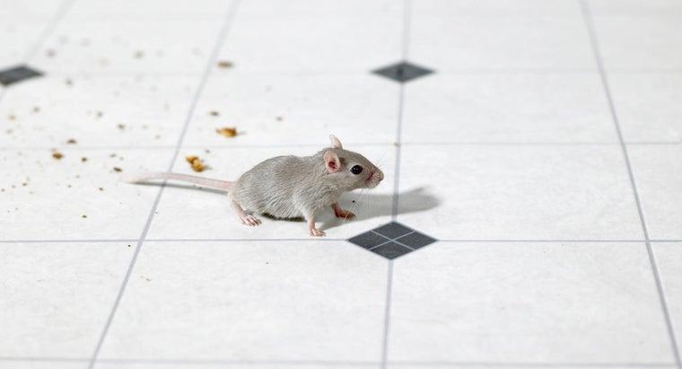 mothballs-effective-driving-away-pests
