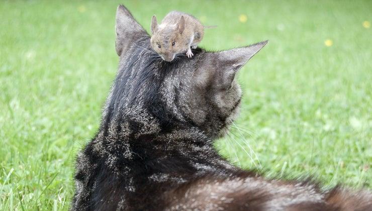 mouse-carnivore-herbivore-omnivore