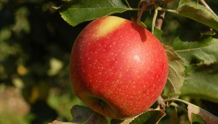 much-apple-weigh
