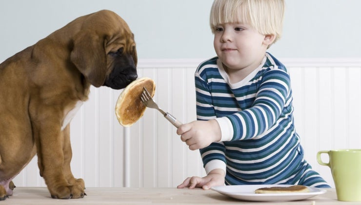 much-food-should-feed-puppy