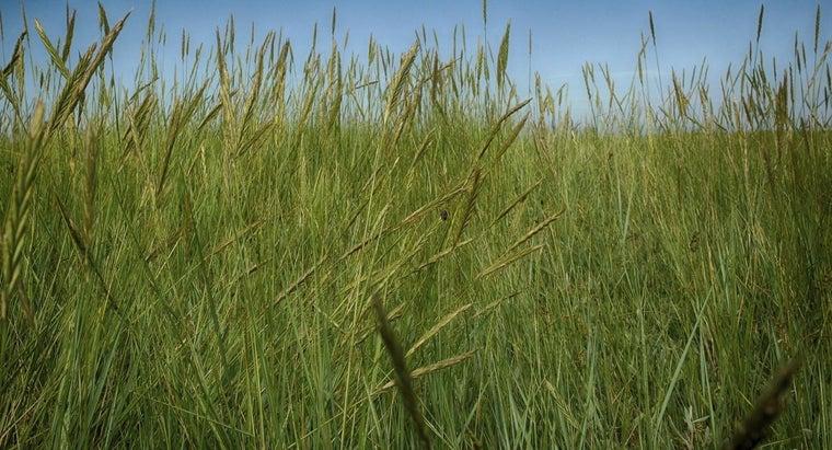 much-oxygen-grass-produce