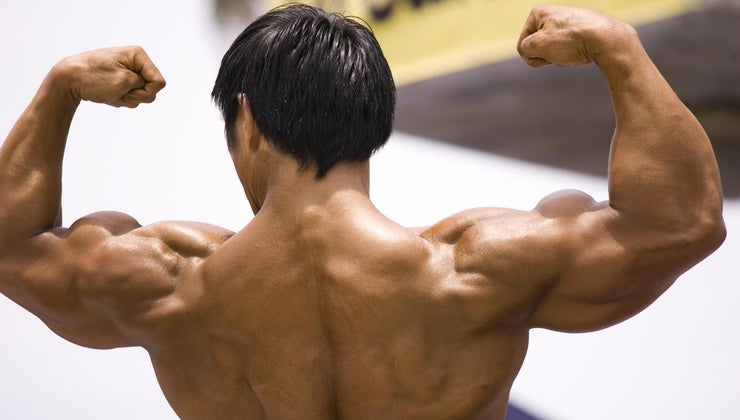 muscular-system-important