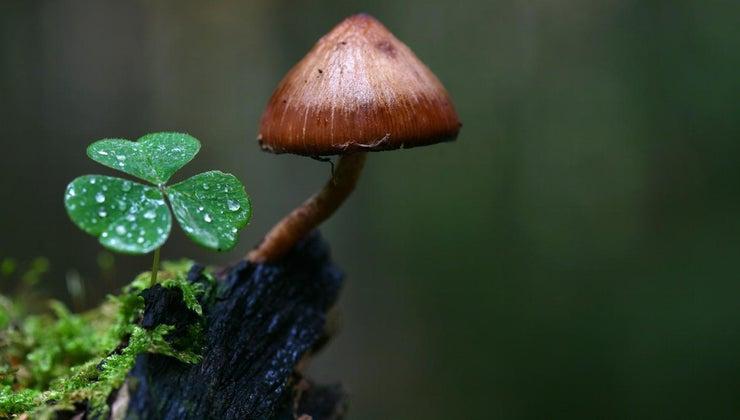 mushrooms-adapt-environment