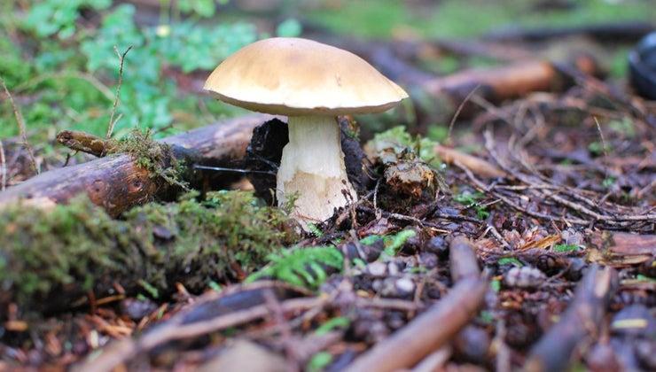 mushrooms-food