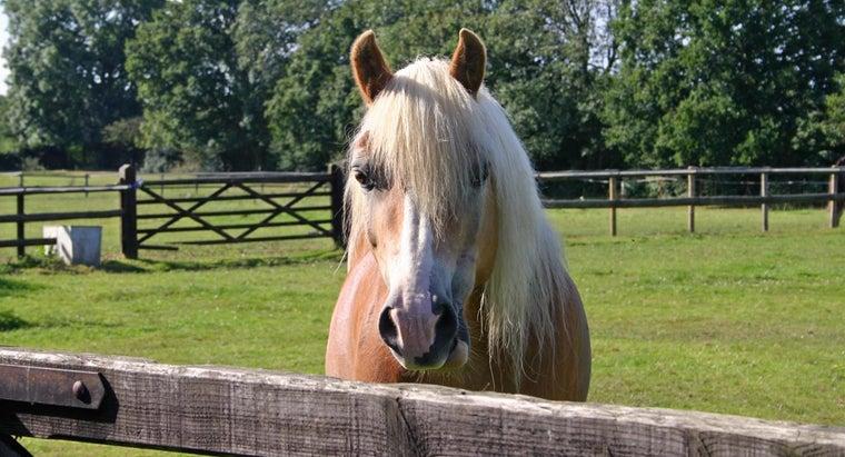 name-barbie-s-horse