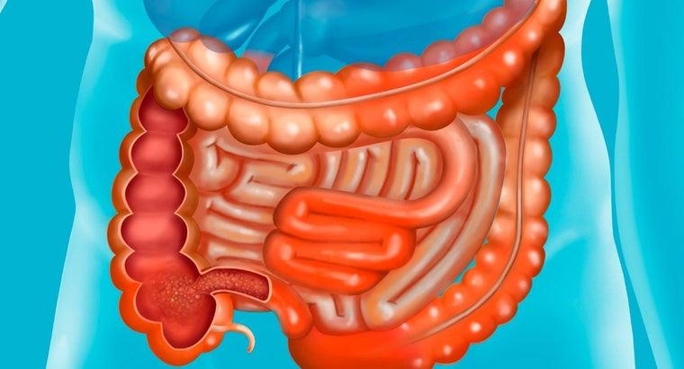 names-parts-small-intestine