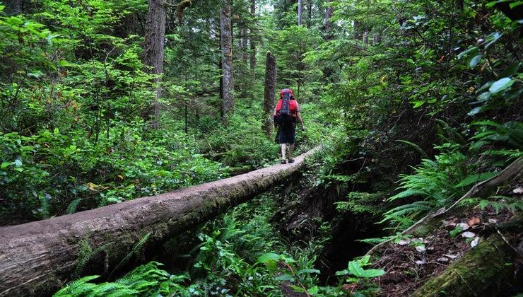 natural-vegetation-zones-canada