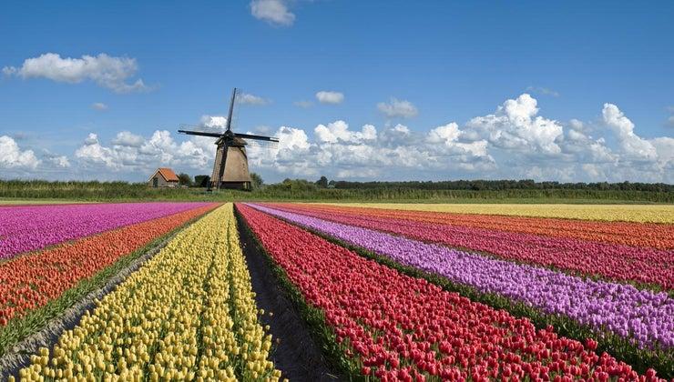 netherlands-famous